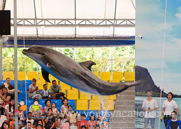 โชว์ปลาโลมาภูเก็ต Phuket Dolphin Show