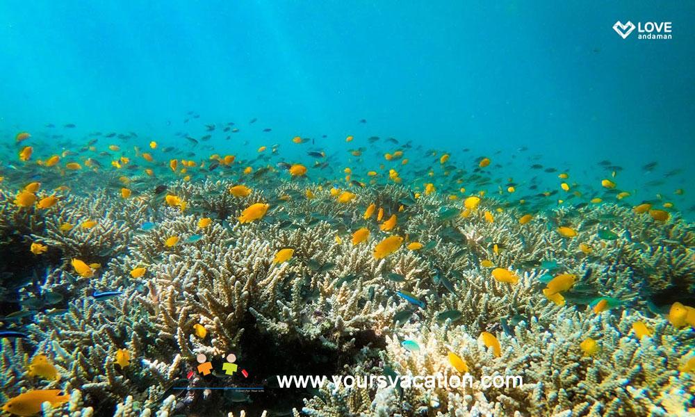 ทัวร์เกาะเซลาวา Se Lava เกาะพม่า